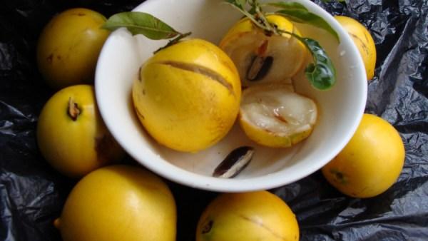 Abiu é fruto nativo da Amazônia eficaz no tratamento de doenças