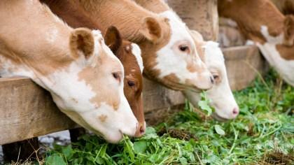 Nutrição animal é fator essencial para ter bons resultados na pecuária