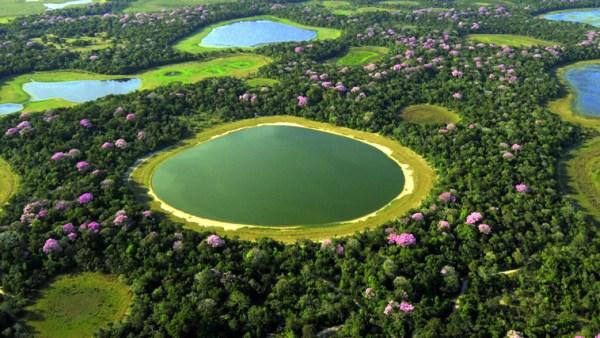 Pantanal é uma área no Centro-Oeste que alaga em determinada época