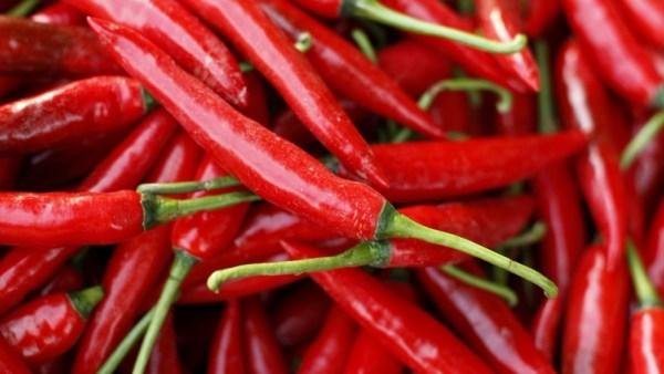 Pimenta malagueta adora calor e cresce bem em locais ensolarados