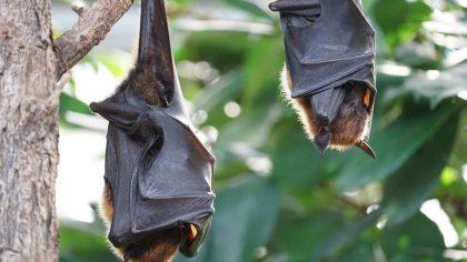 Raiva é doença quase sempre letal que afeta animais e seres humanos