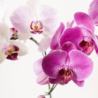 Tipos de orquídeas: conheça os principais, sua beleza e importância