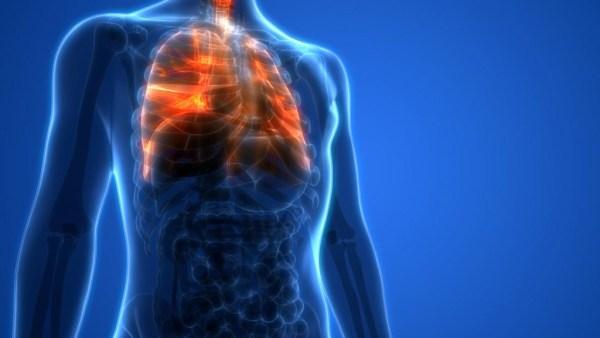 Respiração é intercâmbio gasoso entre o meio ambiente e um organismo