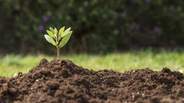 Diferentes tipos de solo exigem manejo diferenciado na agricultura