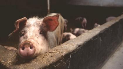 Prenha: conheça os cuidados com os animais em fase gestacional
