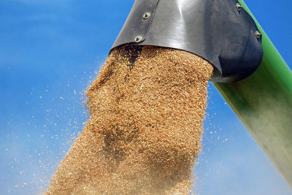 Gavilon se tornou a principal exportadora de trigo no Brasil