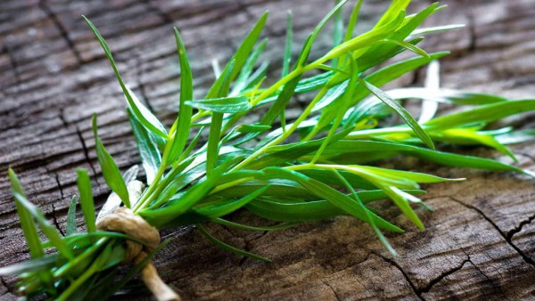 Estragão é uma planta muito utilizada como tempero