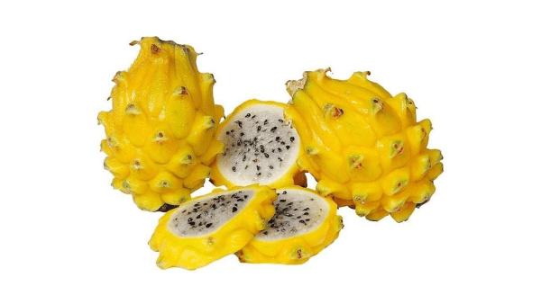 Pitaya amarela, da América do Sul, vem da família das cactáceas