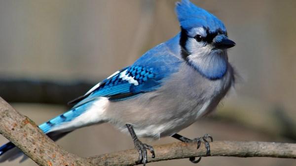Passeriformes é uma ordem comum da classe das aves