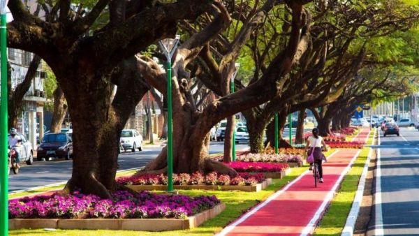 Arborização é essencial para preservar a natureza em espaços urbanos