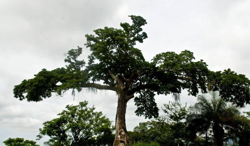 Mirindiba