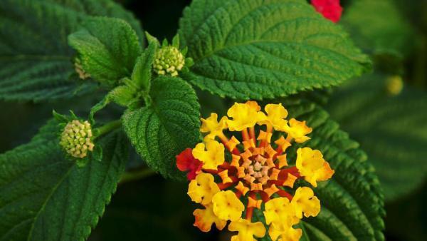 Plantas tóxicas devem ser preocupação constante no campo
