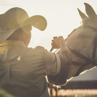 Doma racional melhora a relação entre cavalo e cavaleiro