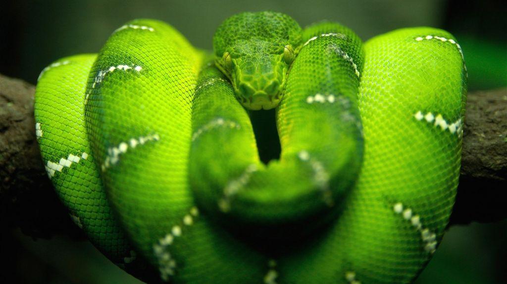 Mamba-verde