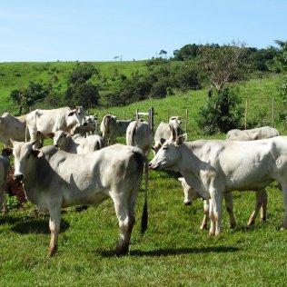 Pecuária de corte é uma das principais atividades do agro nacional