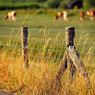 Cerca de arame pode ser farpada ou lisa e é comum no campo