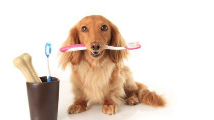 Saúde animal precisa ser tratada com seriedade e respeito