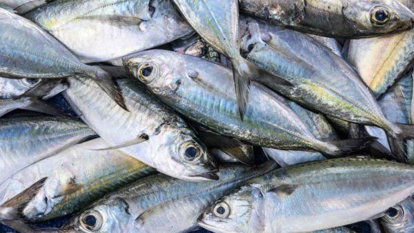 Sardinha é peixe comumente consumido pelo brasileiro