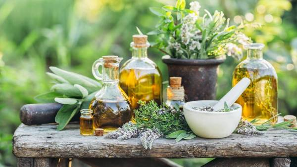 Ervas aromáticas tornam preparações culinárias muito especiais