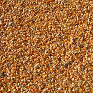 Ração para suínos é baseada principalmente em cereais