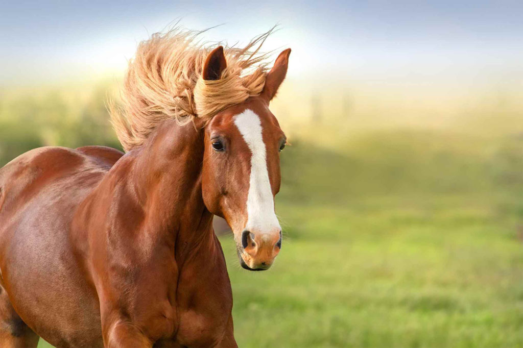Comprar cavalos