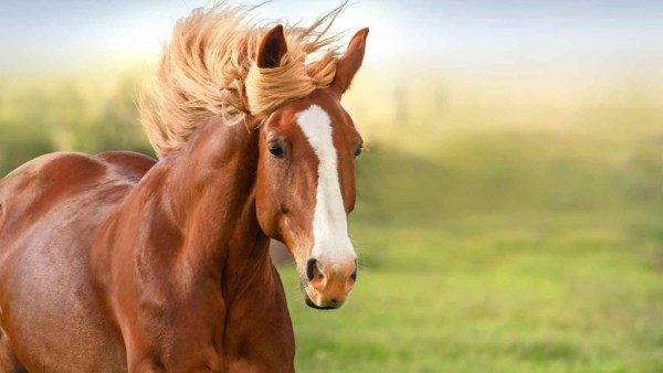 Comprar cavalos é uma decisão importante e exige cautela