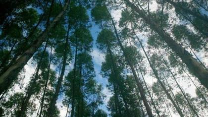 Lignina, que confere rigidez, está presente em plantas terrestres