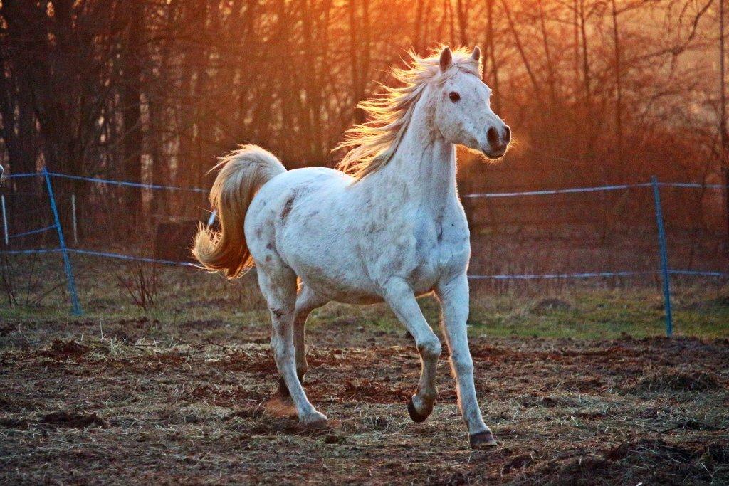 Cavalos mais caros do mundo