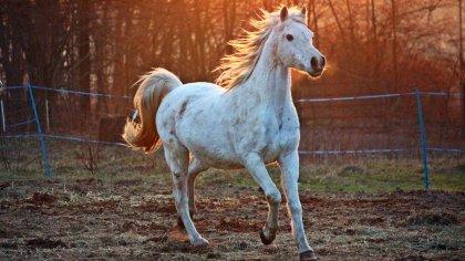 Cavalos mais caros do mundo são das mais variadas raças