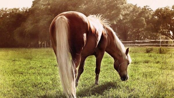 Ração para cavalos deve ser escolhida com atenção