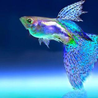 Respiração branquial é realizada por peixes, crustáceos e muitos animais