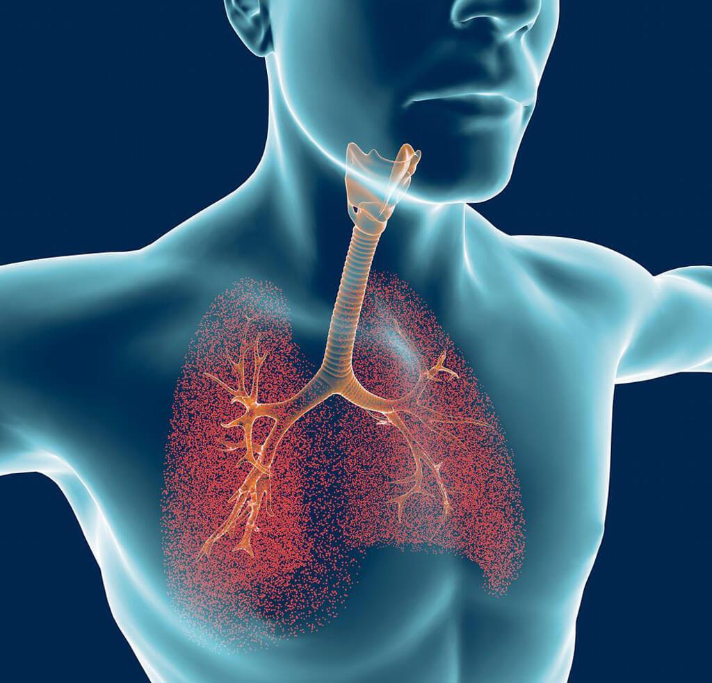 tipos de respiração