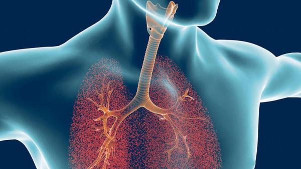 Quais são os principais tipos de respiração e como ocorrem?