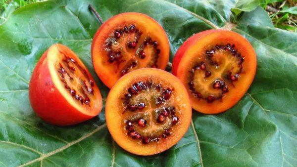 Tomate de árvore é uma boa opção para diminuir os níveis de colesterol