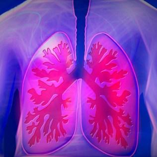 Respiração pulmonar faz trocas gasosas entre o organismo e o meio