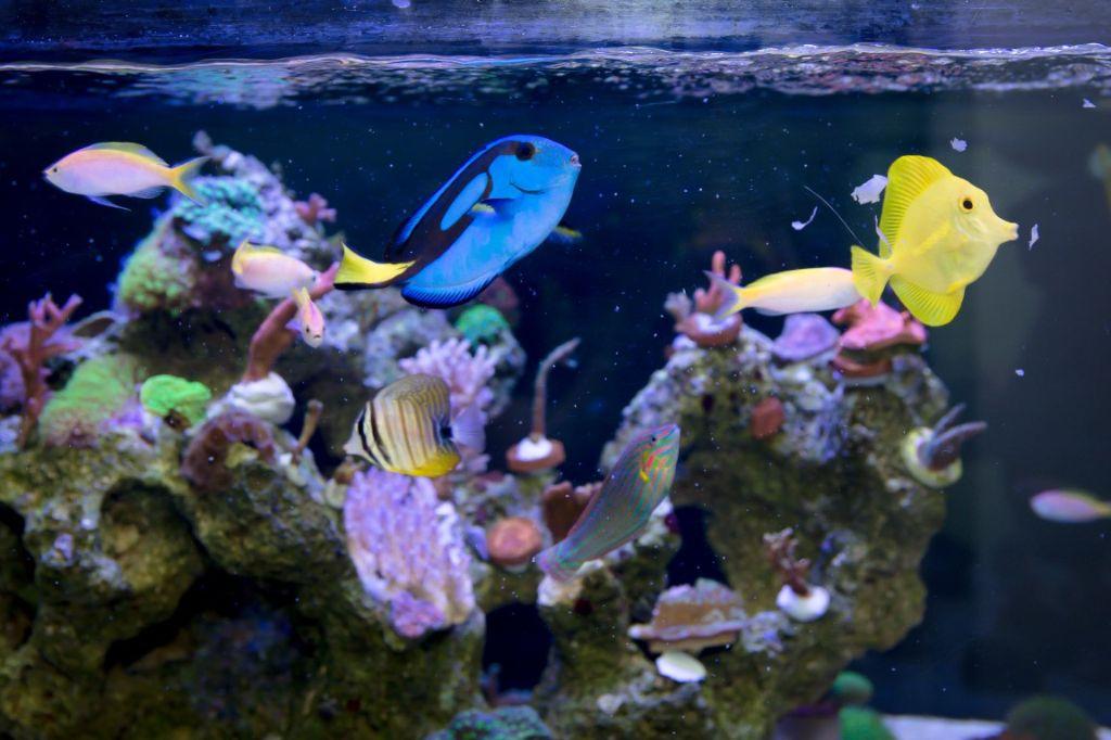 Peixes de água salgada