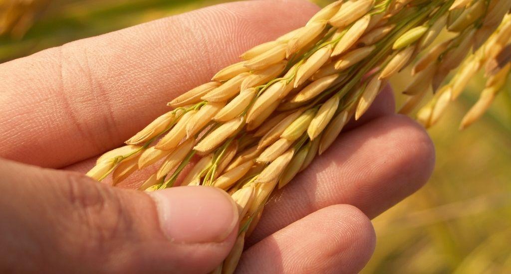 Agrofit