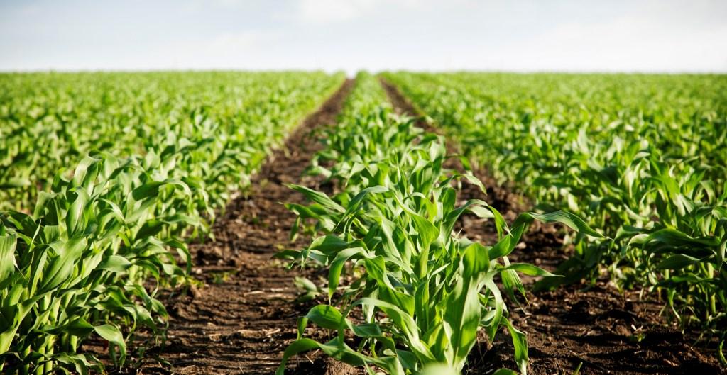 subprodutos do milho