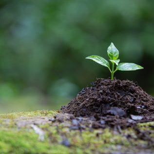 Trichoderma é um importante aliado para a saúde das plantas