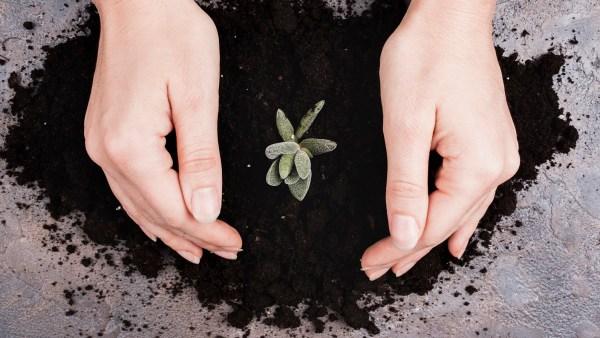 Calagem do solo é vital para a agricultura no Brasil