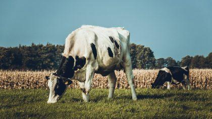Sem manejo de pastagem a pecuária perde produtividade e lucro