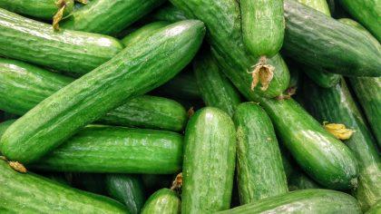 Pepino japonês é uma hortaliça rica em nutrientes e vitaminas