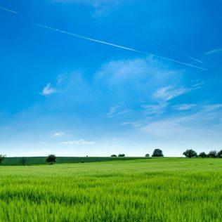 Qualidade de sementes de pastagem garante boa alimentação aos bovinos
