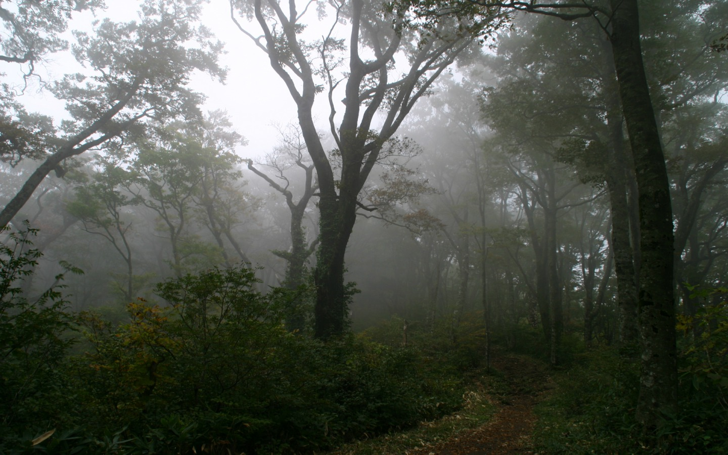 Image result for foggy forest