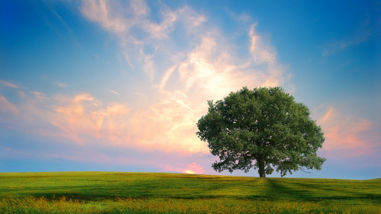 Fresh Nature Wallpapers In Jpg Format For Free Download