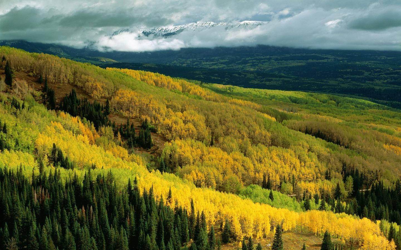 Free Early Fall Wallpaper Aspen Forest In Early Fall Wallpaper Colorado World