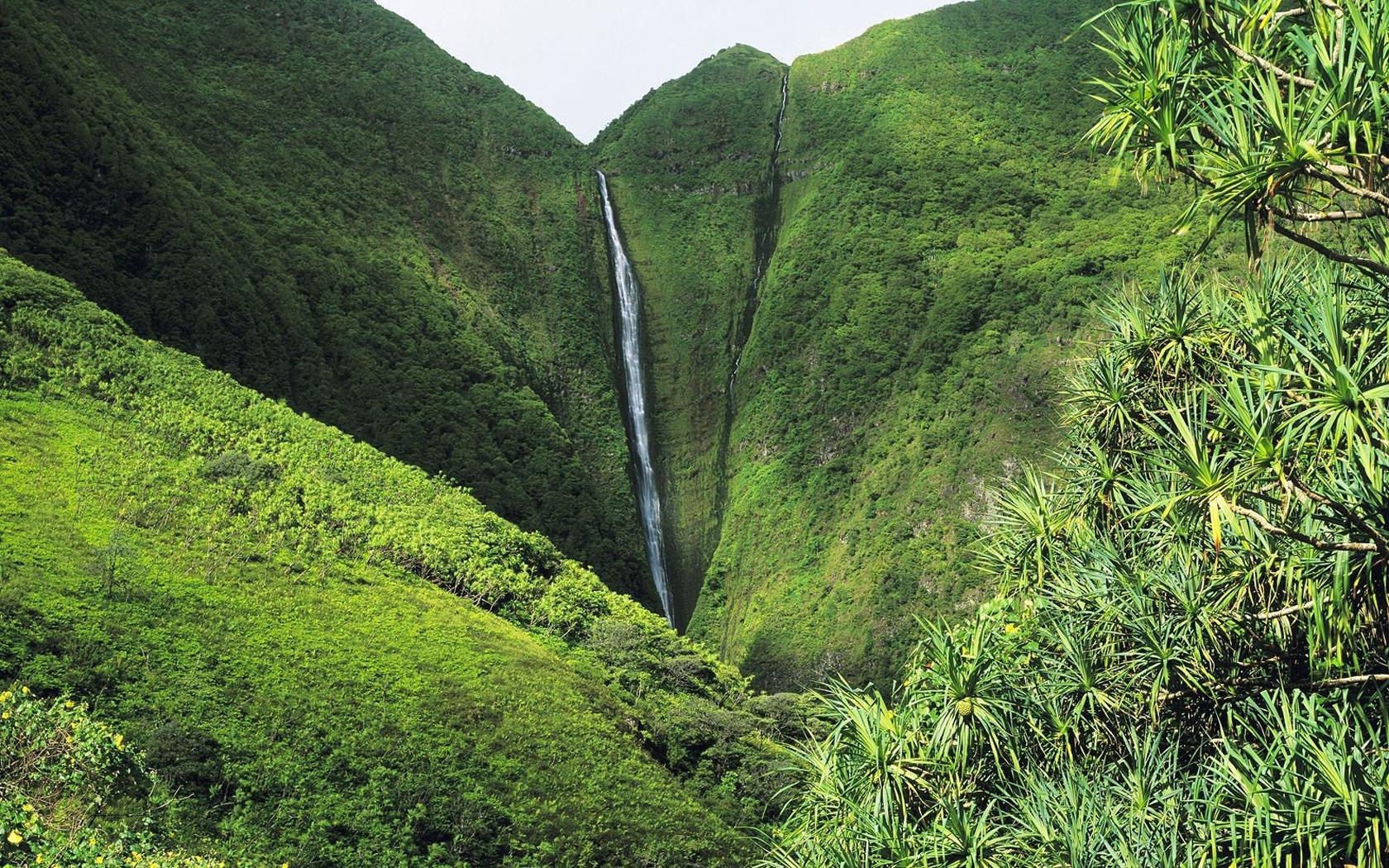 Akaka Falls Wallpaper Tall Waterfall Wallpaper Waterfalls Nature Wallpapers In