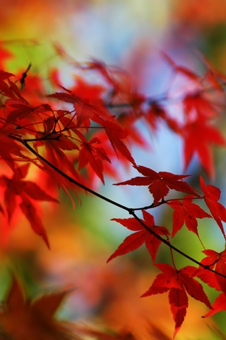 Red Fall Leaves Iphone Wallpaper Autumn Red Wallpaper Autumn Nature Wallpapers In Jpg