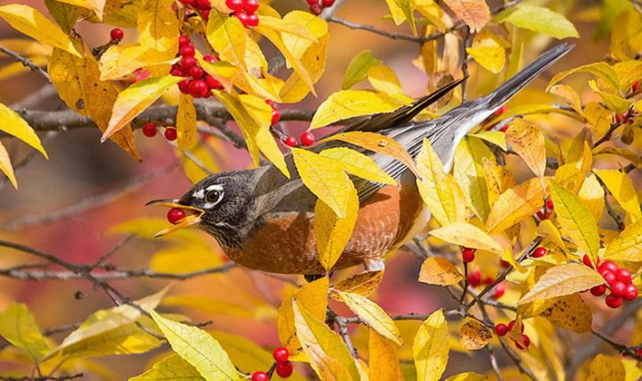 Autumn Fall Leaf Exotic Car Wallpaper The Best Trees Vines And Shrubs To Plant For Birds A