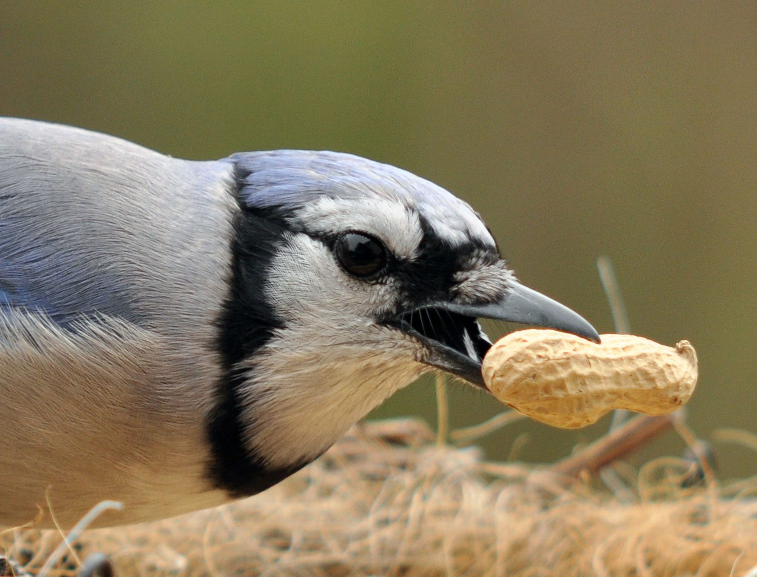 Where Is That Bird Going With That Seed It S Caching Food